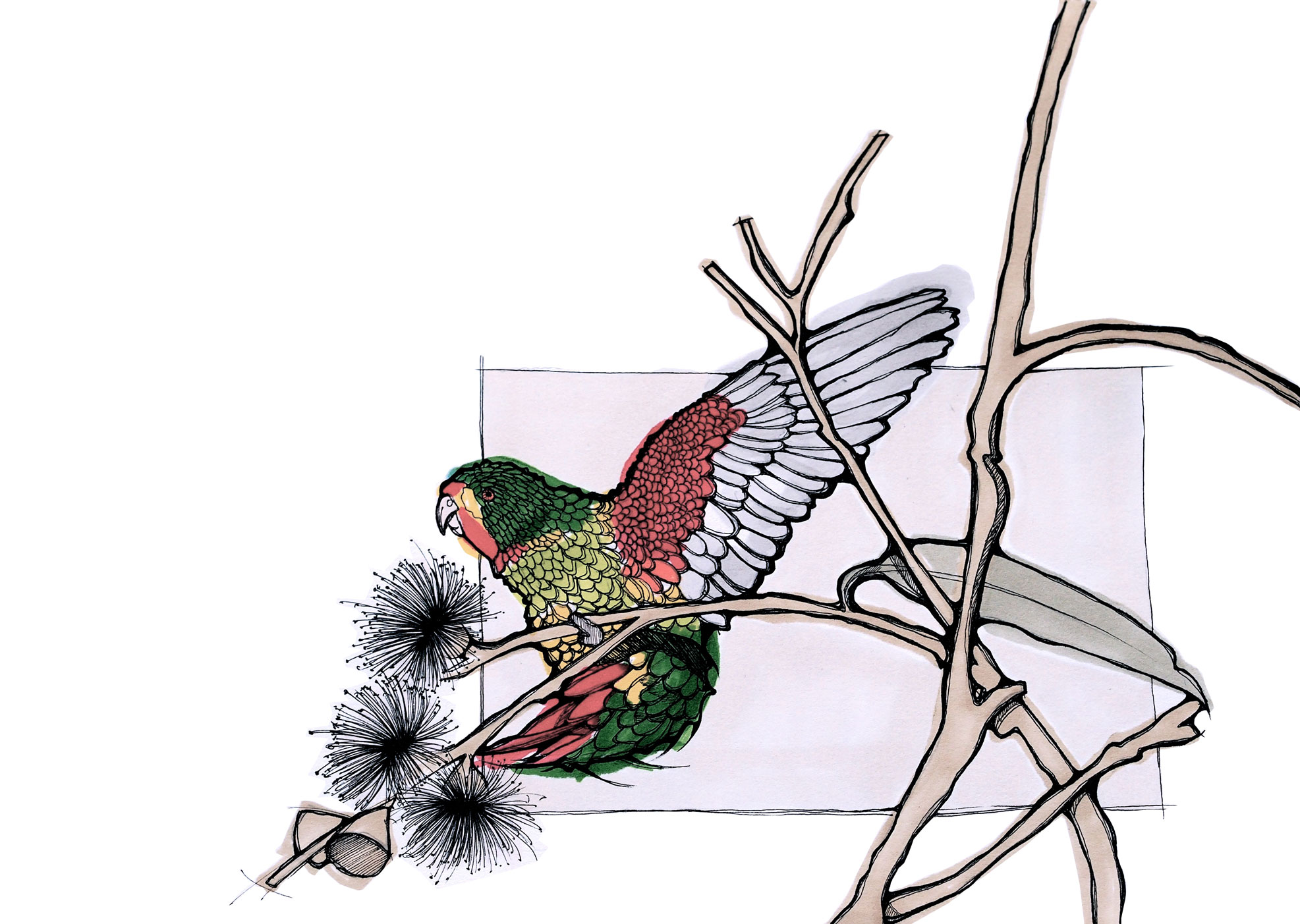 SWIFT PARROT DEJAN STOJANOVIC PANTONE SKETCH